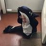 Photo #3 - Killer Whale