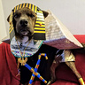 Photo #1 - King Pup