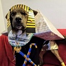 Photo #2 - King Pup Regal look