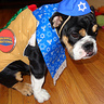 Photo #5 - Cutest Kosher Dog Ever!!!