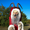 Photo #3 - Krampus