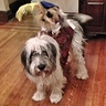 Photo #5 - Sir Didymus and his trusty steed