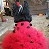 Photo #3 - Ladybug