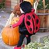 Photo #2 - Ladybug