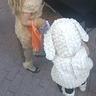 Photo #2 - Lamb