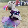 Photo #2 - mardi gras dogs costume