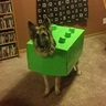 Photo #1 - Breezer as Lego Dog