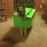 Photo #2 - Lego Dog