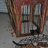 Photo #3 - Leopard in a Jungle Cage
