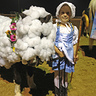 Photo #2 - Lil' Bo Peep