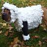 Photo #1 - Lilly the Shar Pei Sheep