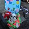 Photo #1 - Lilo and Stitch