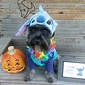 Photo #3 - Lilo & Stitch
