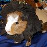 Photo #1 - Lion