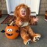 Photo #2 - Lion Cub