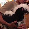 Photo #2 - Jake the Skunk