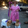 Photo #4 - Bo peep and sheep  photo op