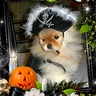 Photo #2 - Pirate Pom