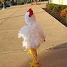Photo #2 - Little Free Range Chicken