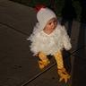 Photo #3 - Little Free Range Chicken