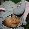 Photo #3 - Little Heffalumps