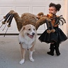 Photo #2 - Spider Princess with large and small spider pets