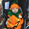 Photo #2 - Giselle the happy pumpkin