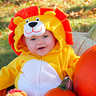 Photo #5 - Little Pumpkin & Lion