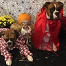 Photo #1 - Little red riding hood and big bad woof and grandma