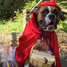 Photo #3 - Little red riding hood
