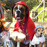 Photo #4 - Little red riding hood and grandmal