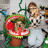 Photo #1 - Phoenix and Gryphon in 'Little Shop Of Horrors'