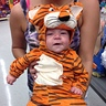 Photo #1 - Little Tiger