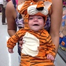 Photo #2 - Little Tiger