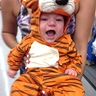 Photo #3 - Little Tiger