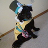 Photo #4 - Happy Howl-o-ween