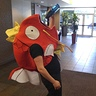 Photo #1 - Magikarp / fish out of water