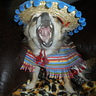 Photo #2 - 'Buster' sings 'Ay Ya Ya Yai Canta y no llores'