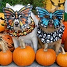 Photo #1 - Mardi Gras Butterfly Dogs
