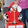 Photo #3 - Marshall from Paw Patrol