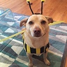 Photo #2 - Jax the bee