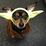 Photo #4 - May the Force Be with You