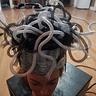 Photo #4 - Medusa