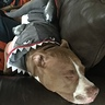 Photo #2 - Our sleepy shark getting a nap in before trick or treating