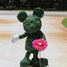 Photo #1 - Mickey Mouse Topiary