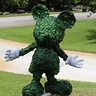 Photo #2 - Mickey Mouse Topiary