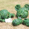 Photo #4 - Mickey Mouse Topiary