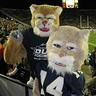 Photo #5 - Mini Cougar Mascot