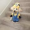 Photo #5 - 'Am I a dog or am I a Minion?'