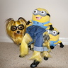 Photo #7 - Somi the Minion says 'do these overalls make my butt look big?'